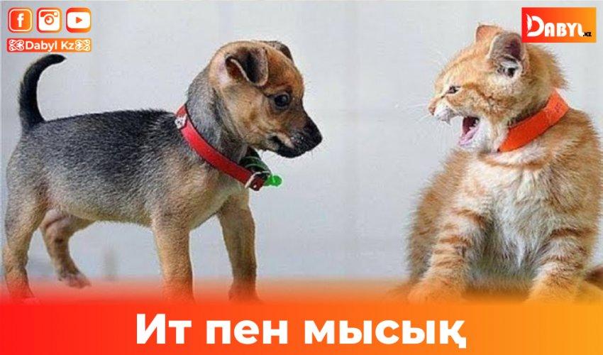 Мысық -Музик пен ит-Тузик
